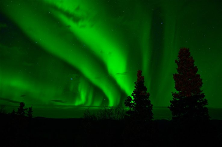 Green light of aurora borealis seen in sky above coniferous trees