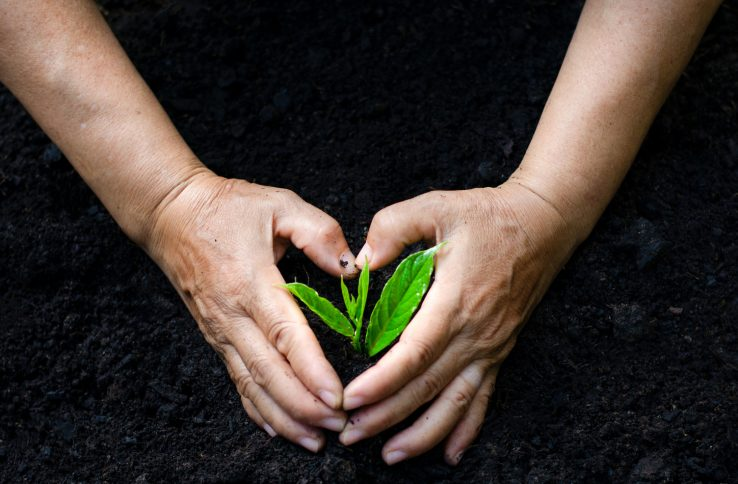 nvironment Earth Day In the hands of trees growing seedlings. Bokeh green Background Female hand holding tree on nature field grass Forest conservation concept